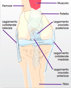 ginocchio normale senza protesi